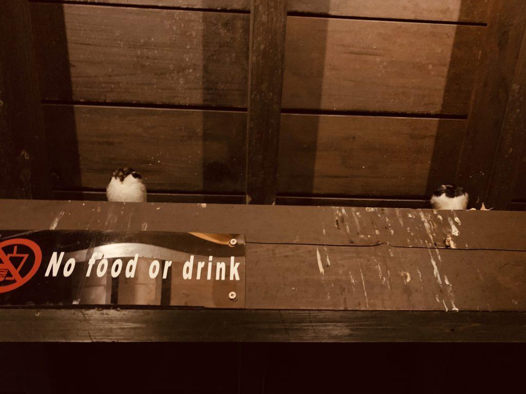 湯けむり亭の燕