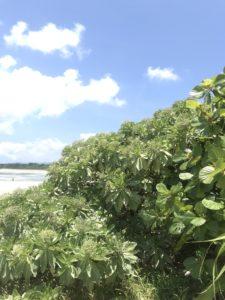 生き生きした沖縄の植物