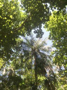ピピ・レイ島の植物