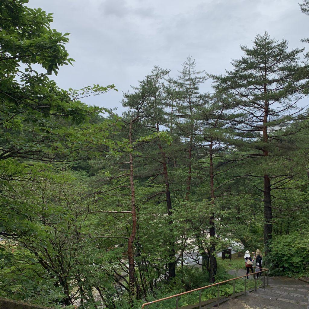 草津ビジターセンター周りの景色