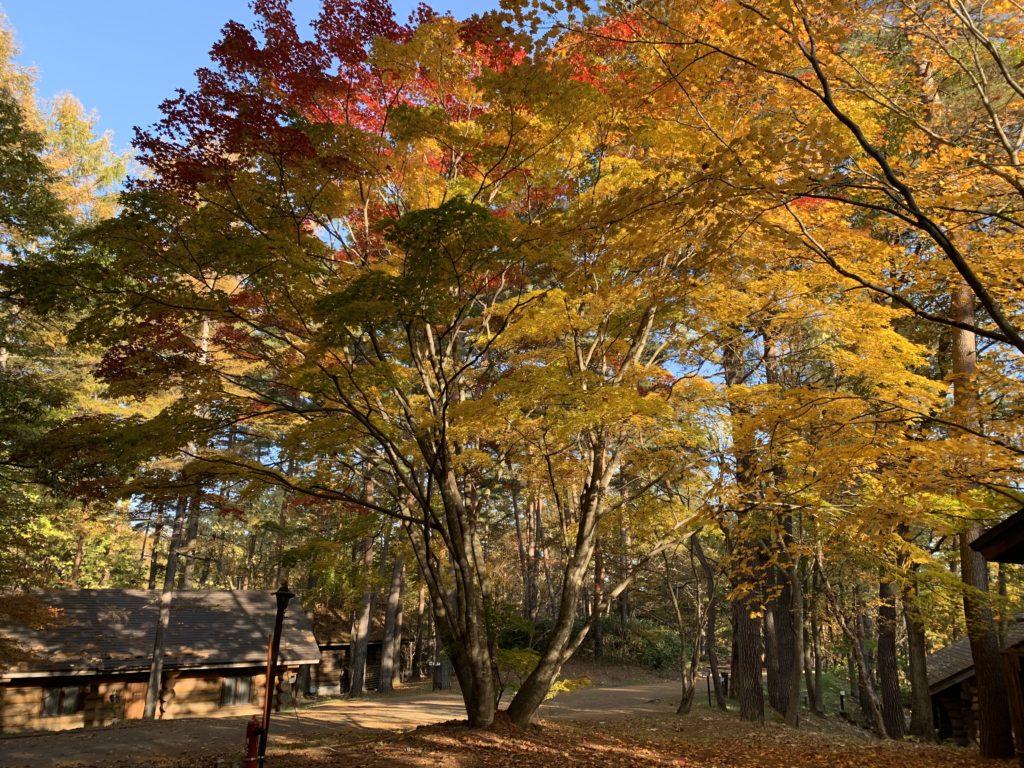 草津温泉ロイヤルコースの紅葉