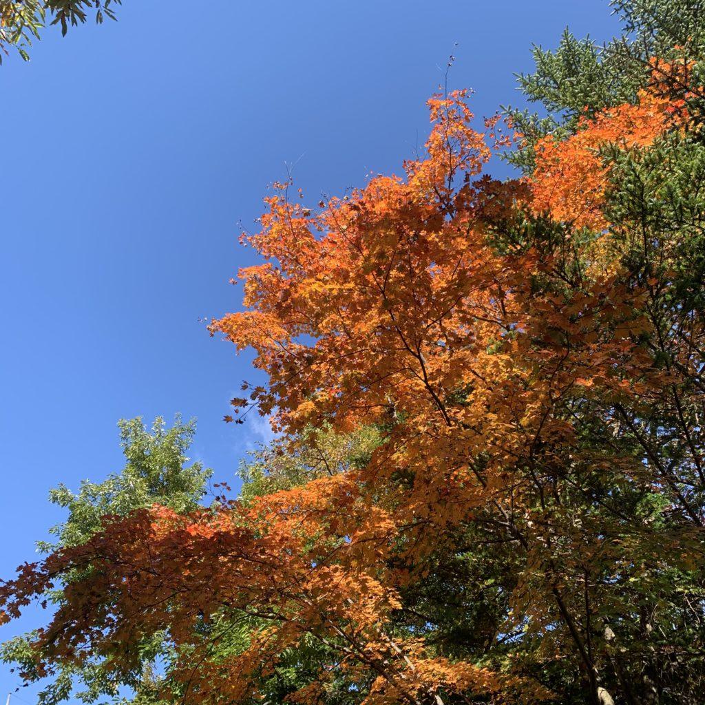 草津ナウリゾートホテル周りの紅葉