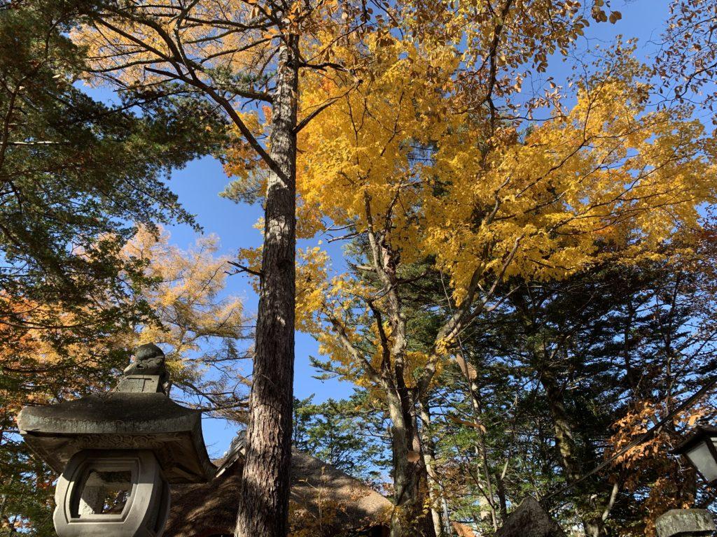 光泉寺の紅葉