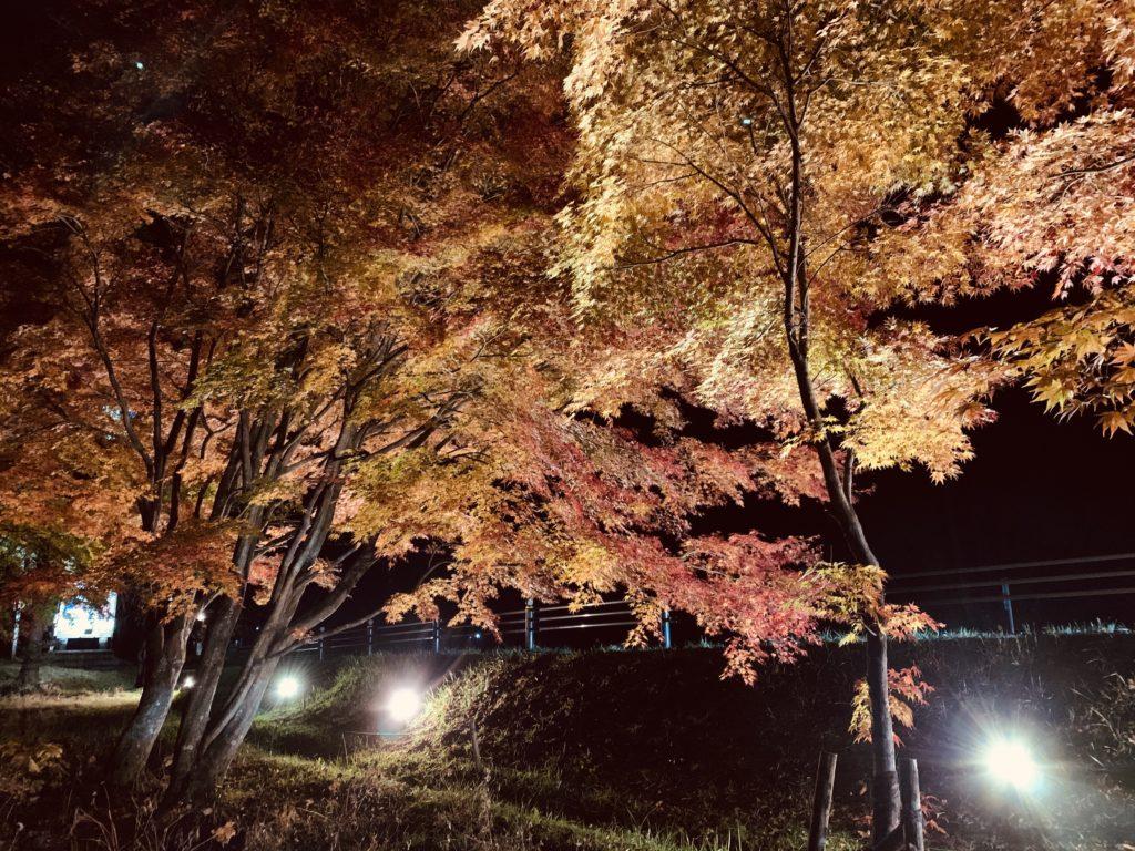 草津運動茶屋公園の紅葉