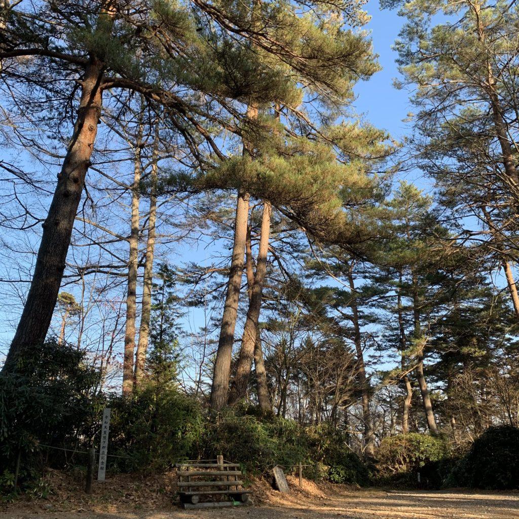 白根神社の天皇陛下記念樹