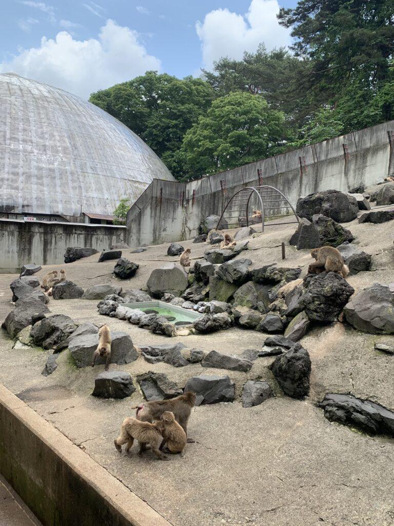 草津熱帯圏の猿山