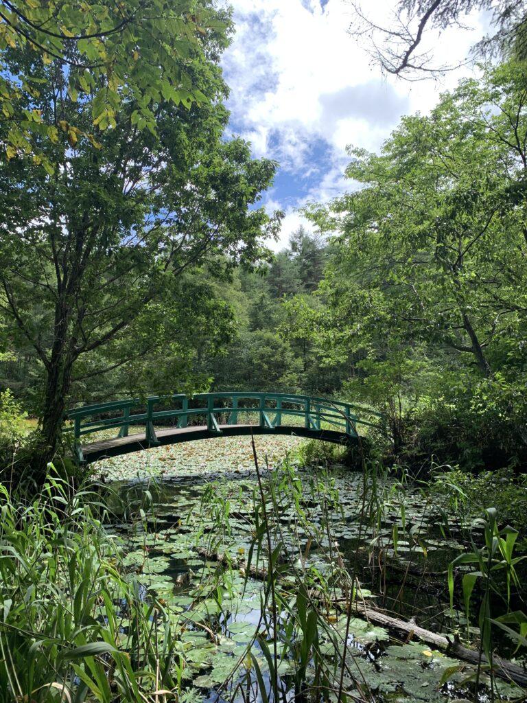 睡蓮の浮かぶ池に掛かった橋
