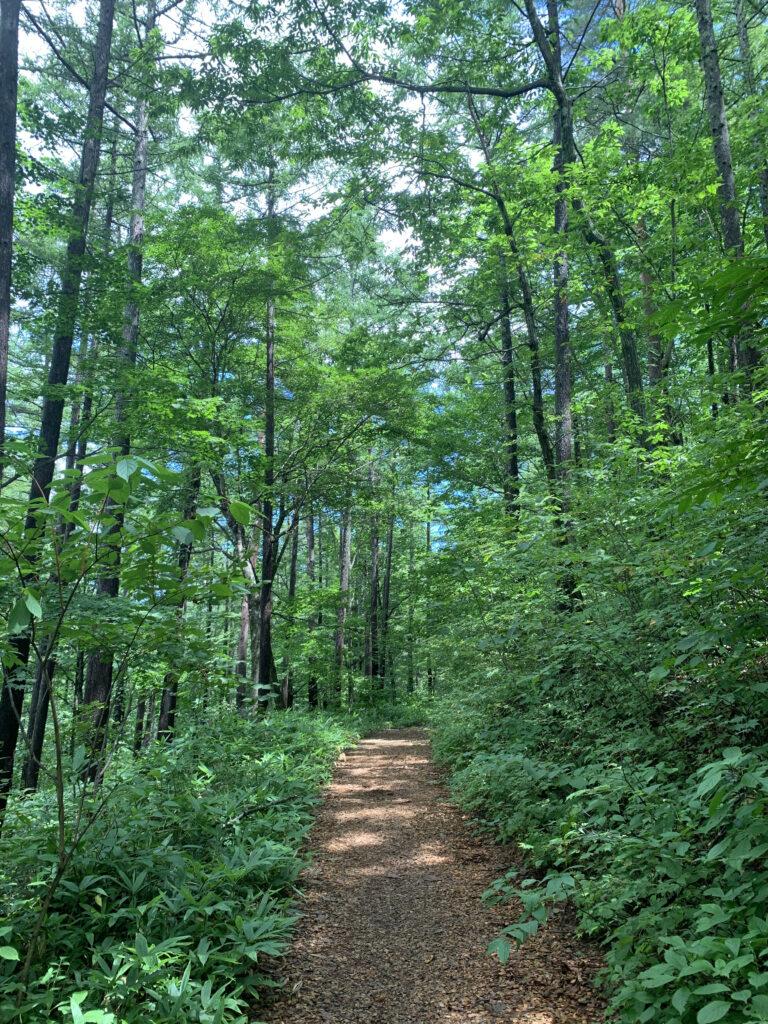 自然豊かな森の道
