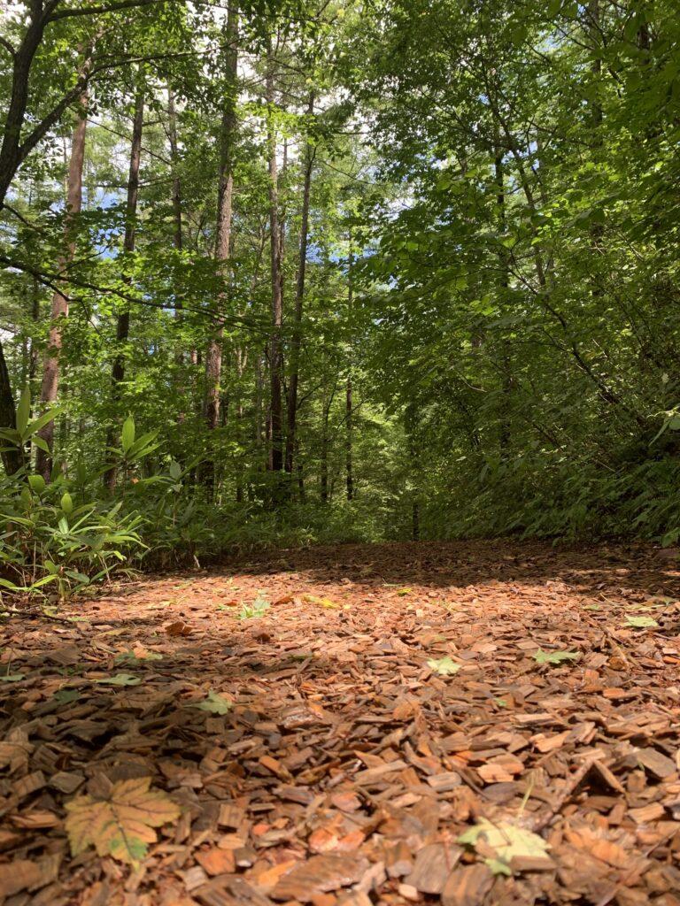ウッドチップが敷き詰められた森の道