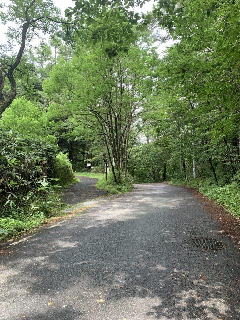 両脇から森の様に木の生えた道路