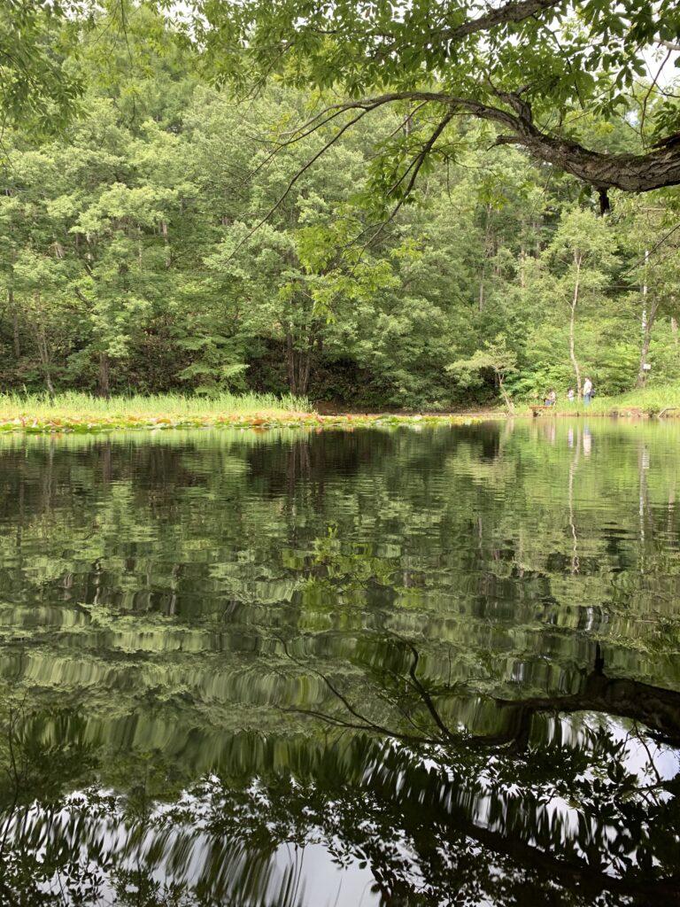 緑の木々が生えた大きな池